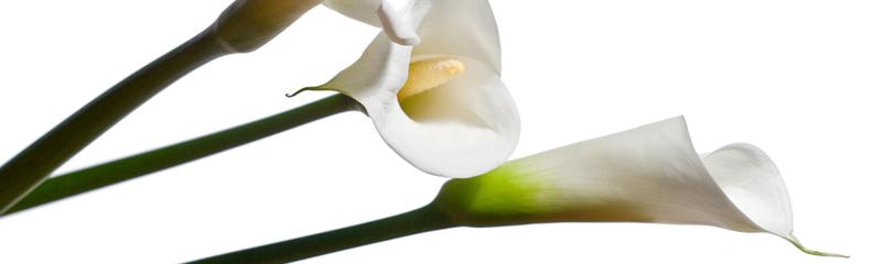 blommor vid sorg